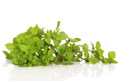 Oregano Herb Leaves. Oregano herb leaf sprig isolated over white background with reflection royalty free stock photo
