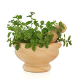 Oregano Herb Leaves. Oregano herb leaf sprigs in a marble mortar with pestle, isolated over white background. Origanum royalty free stock photos