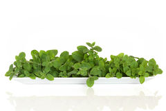 Oregano Herb Leaves Stock Photo