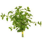Oregano Herb Leaves Stock Photography