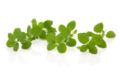 Oregano Herb Leaves Royalty Free Stock Image