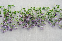 Oregano herb origanum vulgare on linen cloth Stock Photos