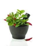 Oregano Herbs Stock Photos