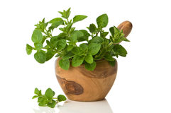 Oregano Herbs Royalty Free Stock Image