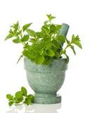 Oregano Herbs Royalty Free Stock Photo