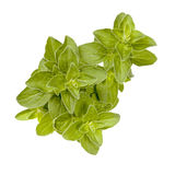 Oregano Isolated on White Stock Image