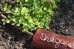 Oregano-Kräuter in einem Garten lizenzfreies stockfoto