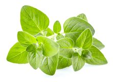 Oregano leaves in closeup Royalty Free Stock Photography