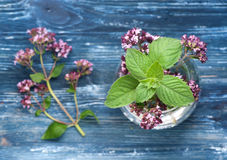 Oregano and mint Royalty Free Stock Photos