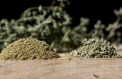 Oregano and oregano Stock Image