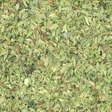 Oregano (Origanum vulgare. ) herb aka wild marjoram or sweet marjoram stock photography