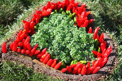 Oregano and red hot pepper Stock Photo