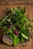 Oregano, sage, basil, thyme on bark on wooden background. Oregano, sage, basil, thyme herbs on bark on wooden background stock photo