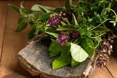Oregano, sage, basil, thyme on bark on wooden background. Oregano, sage, basil, thyme herbs on bark on wooden background royalty free stock image