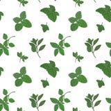 Oregano seamless pattern Stock Images