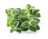 Oregano spices Royalty Free Stock Photography