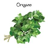 Oregano sprigs Stock Photography