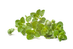 Oregano Royalty Free Stock Images