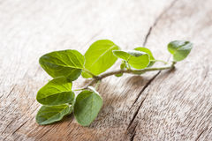 Oregano twig on wooden table Stock Photography