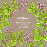 Oregano vector frame. Oregano branches vector frame on color background Royalty Free Stock Image