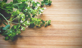 Oregano. Vintage toned picture of oregano at the wooden background Stock Image