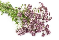 Oregano on a white background Stock Photos