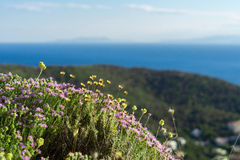 Oregano and wild flowers in the mountains of Greece Stock Image