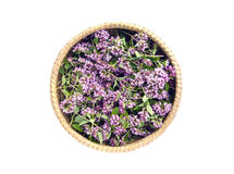 Oregano wild marjoram (Origanum vulgare) medical flowers in basket Royalty Free Stock Images