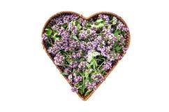 Oreganoläkarundersökningen för lösa mejram och kryddar blommor i hjärtaformkorg Arkivfoto