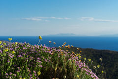 Oreganon och lösa blommor i bergen av Grekland Arkivfoton