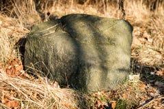 Oregelbundna stenar i skogen miljön, stenar som ligger i t arkivfoto