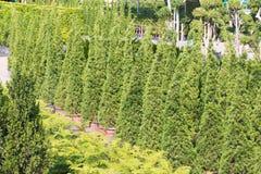 Oregon-Baumschulen und Sämlinganlagen Stockfotos