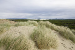 Oregon Beach grass royalty free stock photography