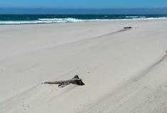 Oregon beach Royalty Free Stock Image