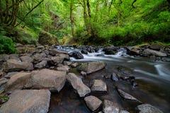 Oregon bergflod i skogen royaltyfria foton