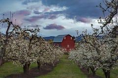 Oregon-Blüten Lizenzfreies Stockbild