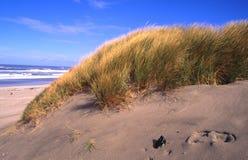 Oregon brzegowi portrety zdjęcie stock