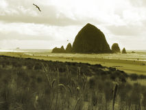 Oregon Coast. Shot of the beautiful Oregon Coast royalty free stock photography