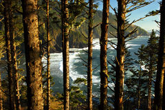 Oregon coast portraits. Viewing Heceta Head beach between the trees Royalty Free Stock Photography