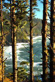 Oregon coast portraits. Viewing Heceta Head beach between the trees Royalty Free Stock Image