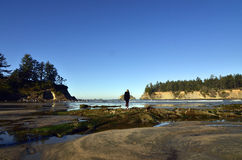 Oregon Coast. Woman walking around in the Oregon coast tidepools Stock Photography