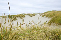 Oregon Coastal Sand Dunes Stock Photography