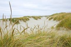 Oregon Coastal Sand Dunes Stock Photography