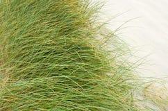 Oregon Coastal Sand Dunes Royalty Free Stock Image