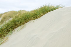 Oregon Coastal Sand Dunes Stock Photos