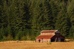 Oregon country portraits. Evening light enhances the weathered wood grain on a rustic barn. Focus point is on the barn Royalty Free Stock Images