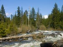 Oregon creek europejskiej arogancki rzeki Obrazy Royalty Free