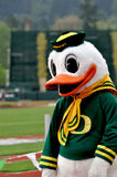 Oregon Duck. Mascot at the 2012 marathon at hayward field in Eugene Oregon royalty free stock image