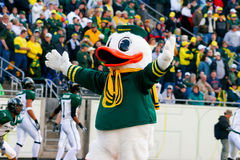Oregon Ducks Mascot Puddles at Autzen Stadium Stock Photos