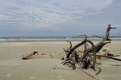 Oregon Dunes. Nationa Recreation Area Royalty Free Stock Photo
